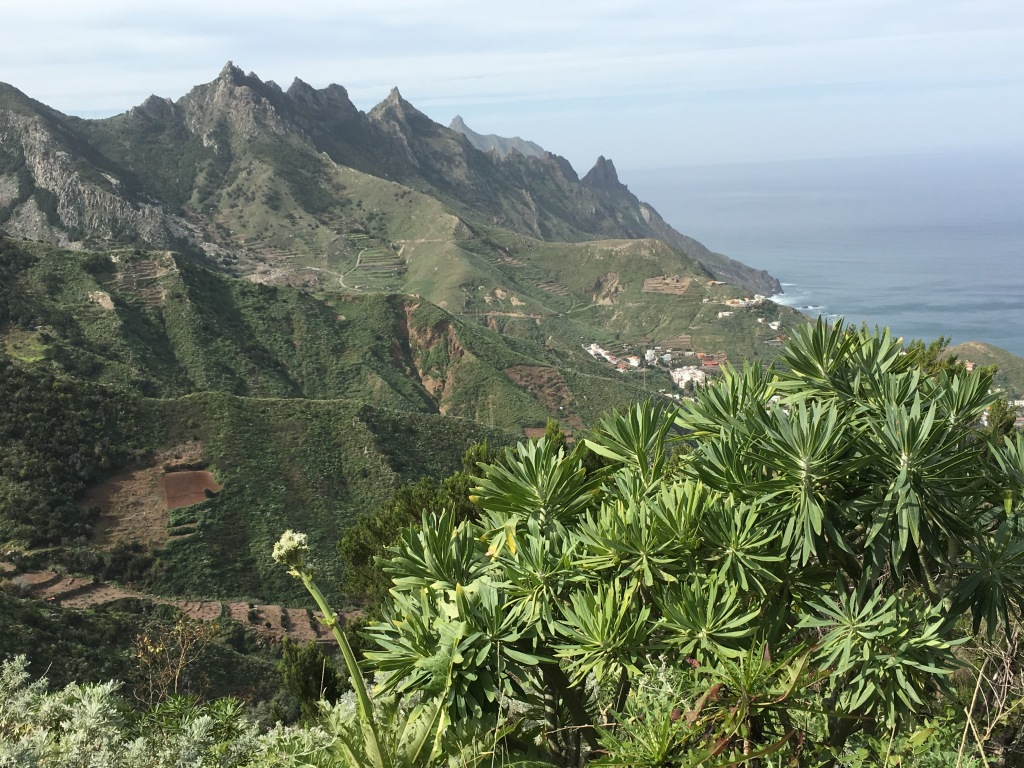 The scenery while hiking in the Anaga, Tenerife